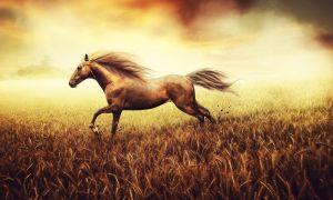 Как ухаживать за лошадью после травмы?